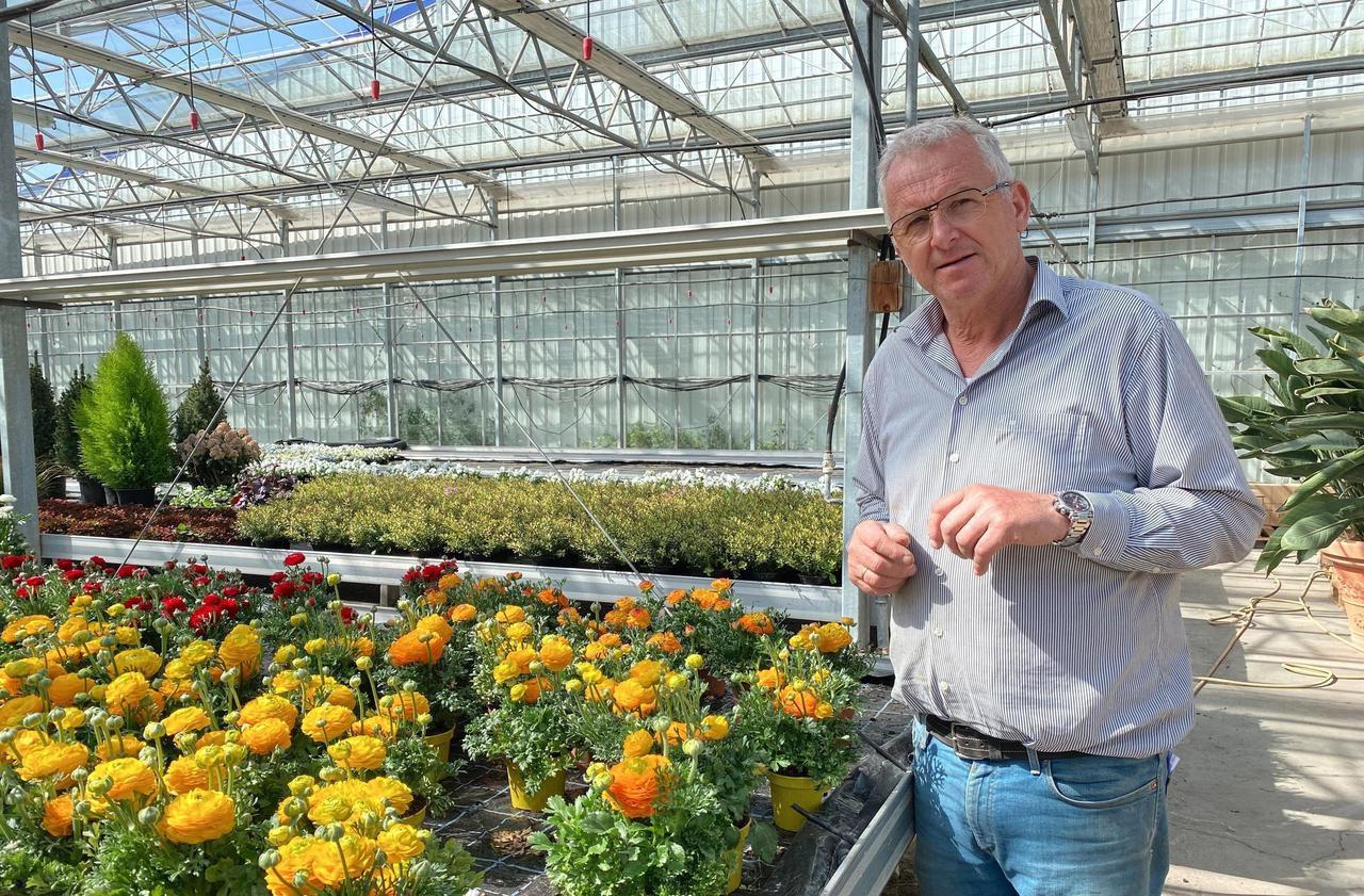 Horticulteur Val D Oise coronavirus : en alsace, les horticulteurs jettent des