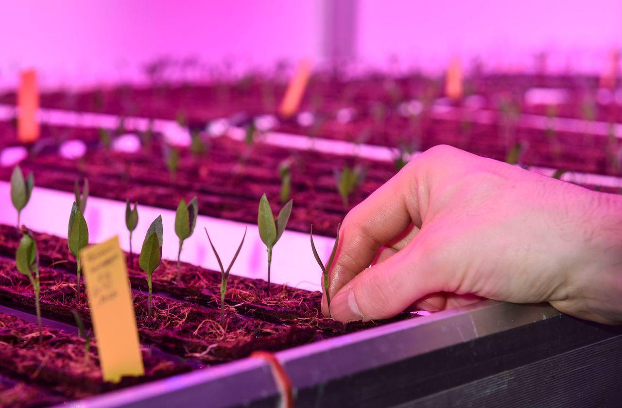 Agriculture urbaine : menthe et ciboulette bientôt dans le métro parisien