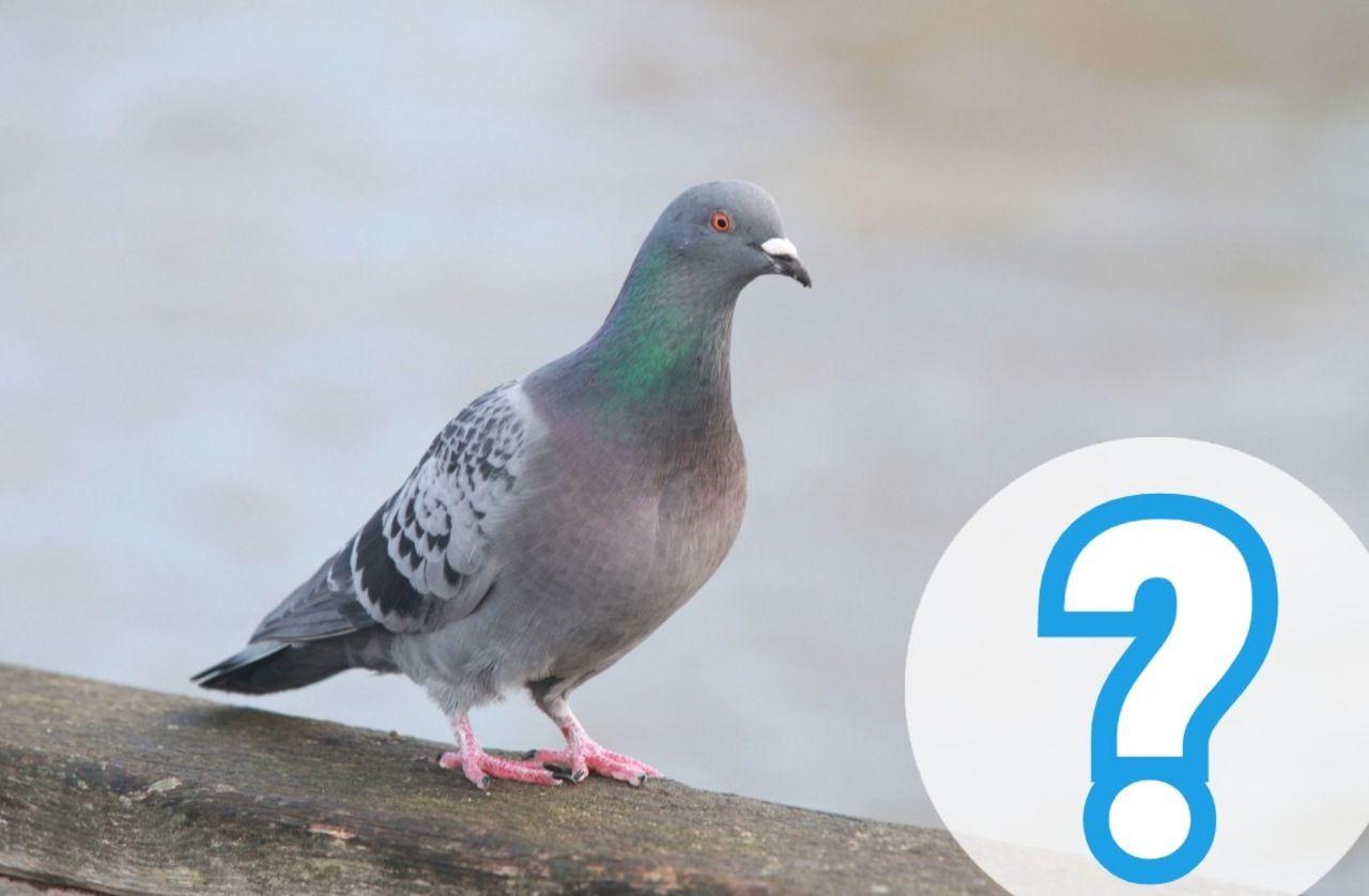 Coronavirus : «Les oiseaux peuvent-ils transporter le virus du Covid-19 ?»