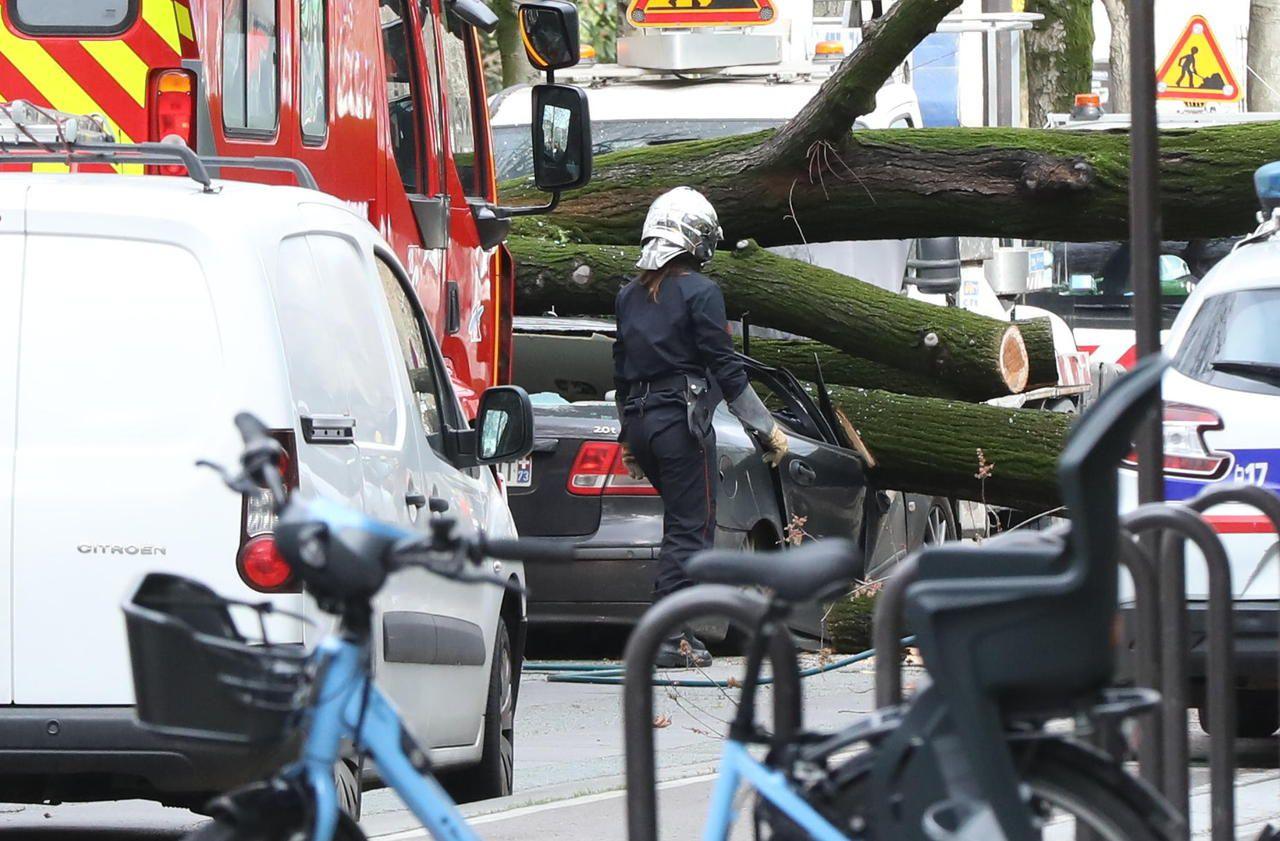 Conducteur écrasé par un arbre à Paris : une enquête confiée à des experts indépendants