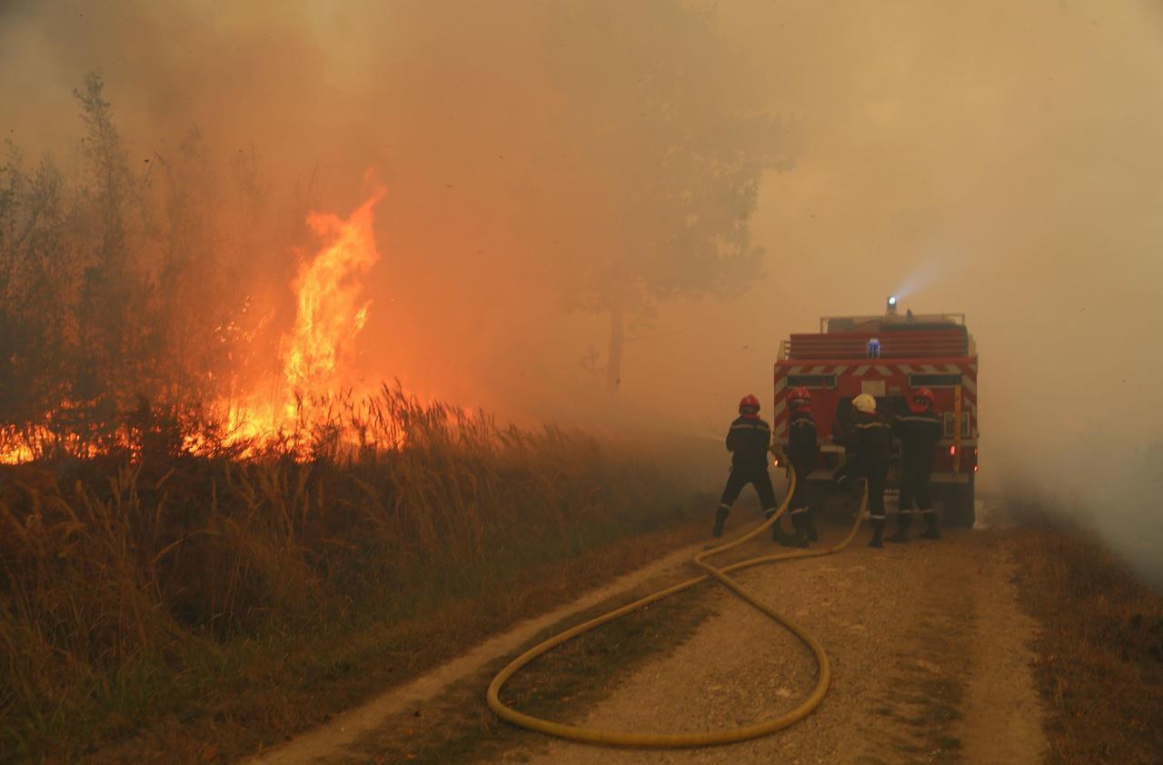 Montgeron : un an après l'incendie qui a ravagé 60 hectares de forêt, on pense au reboisement - Le Parisien