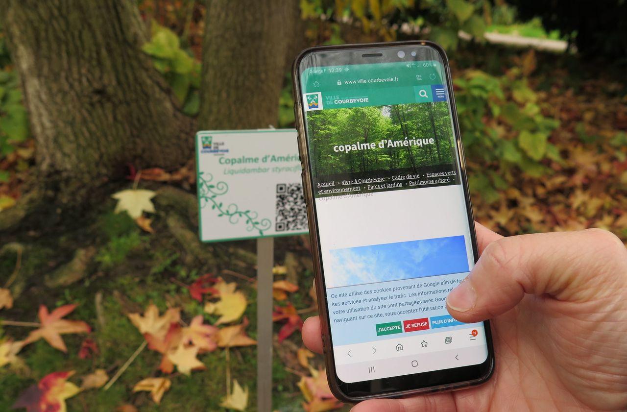 Courbevoie : flashez les arbres pour connaître leur histoire