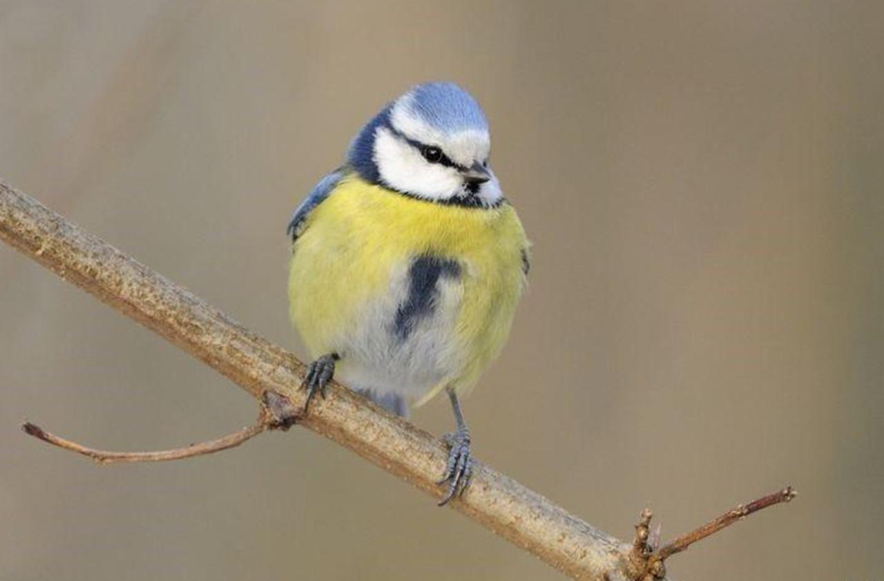 Pendant le confinement, observez ces huit oiseaux... même en ville !
