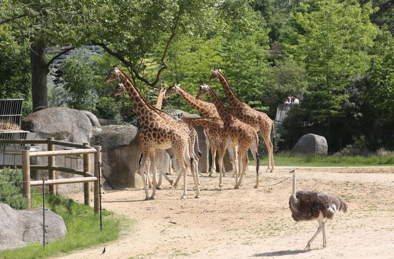 Paris : le zoo de Vincennes braqué