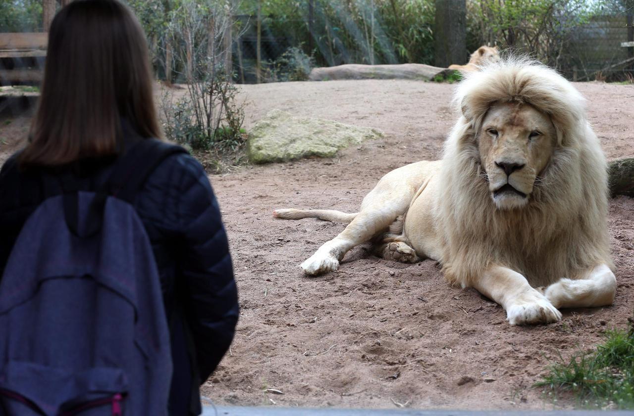 Le zoo d'Amnéville échappe à la liquidation, mais va devoir se réinventer