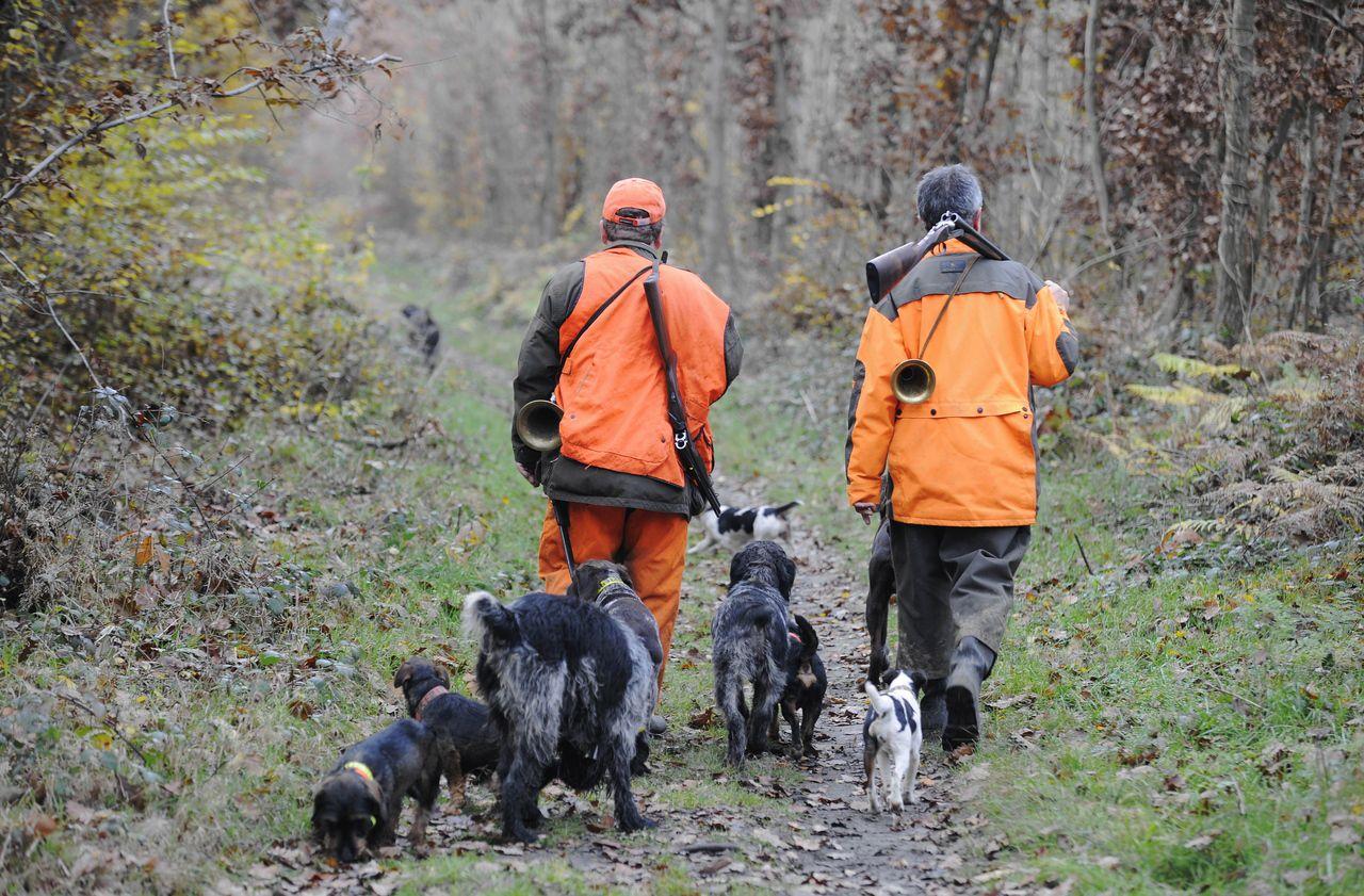 Ardennes : 158 sangliers tués en une seule battue, un «dérapage» pour la fédération de chasse - Le Parisien