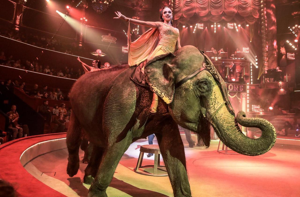 Paris veut en finir avec les animaux dans les cirques