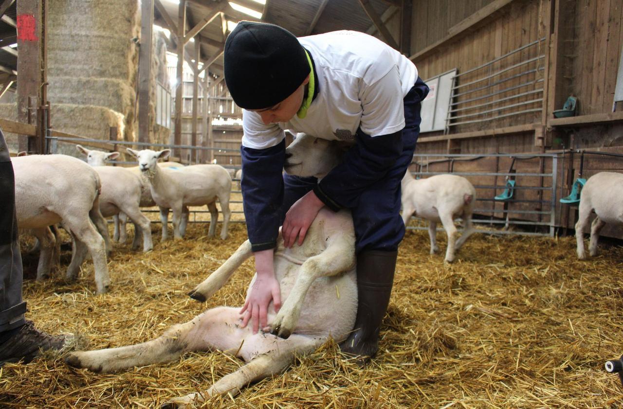 Les élèves de Songeons au concours du meilleur berger pour affirmer leur vocation