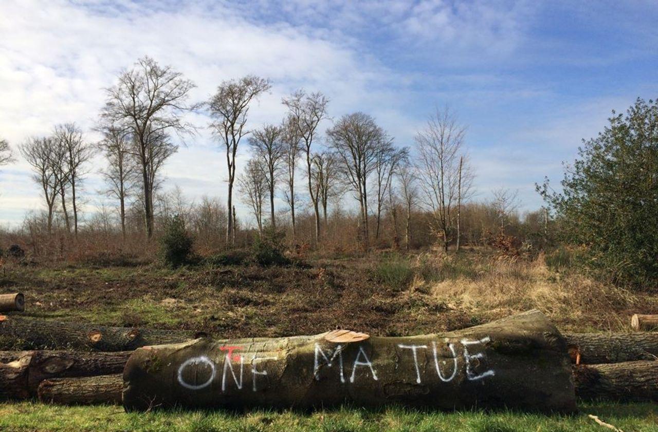 Oise : l'Office national des forêts fait face aux bad buzz