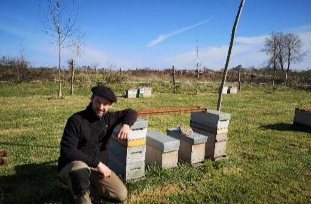 Landes : ses ruches produisent le meilleur miel français
