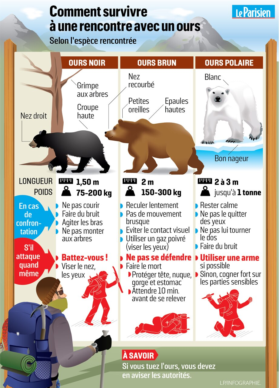 Quoi faire si on rencontre un ours noir en forêt?